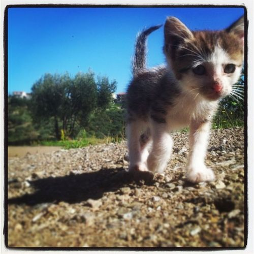 Gattino Cat Pisciotta Caprioli Cilento Campania Pncvd Instaitalia Pet