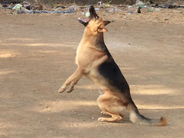 Dog Catch Catch The Moment Dog Photography Dog Photo Dog Photos Official EyeEm © Dog Photografie Dog And Ball. Dog And Ball My Catcher Awesome Performance Dog Play My Exercise Exercise Time Exercise Exercise Challenge Dog Playtime My Dog Dogslife Dog❤ Doglover Dog Love Doggy