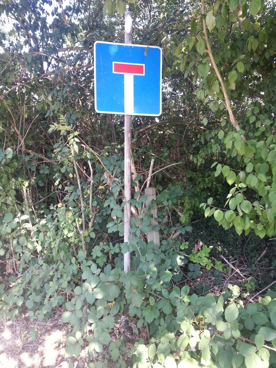 plant, growth, day, communication, no people, green color, nature, blue, outdoors, guidance, road sign, tree