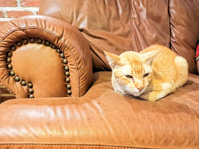 Cat resting on sofa