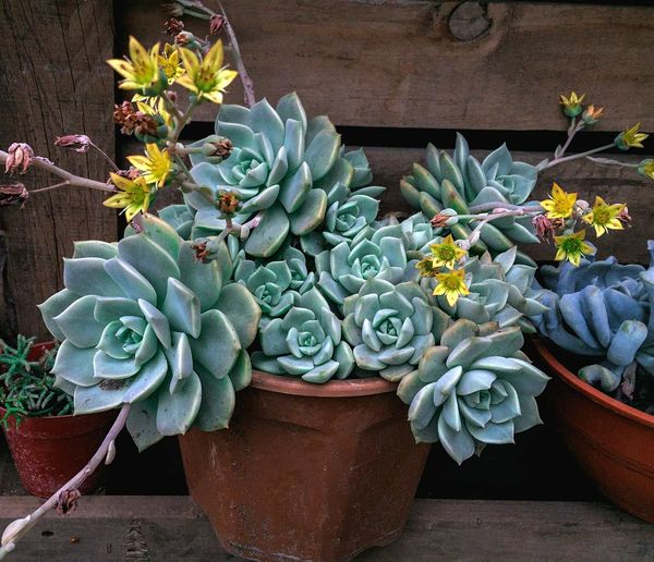 Growth Plant Succulent Plant Potted Plant Nature Flower Cactus Flowering Plant No People Beauty In Nature Day Green Color High Angle View Freshness Vulnerability  Close-up Botany Outdoors Fragility Flower Head