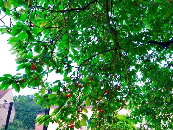 cherries 🍒 😍