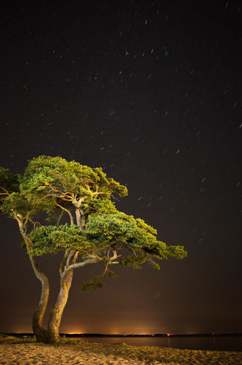 Close-up of illuminated tree against sky at night