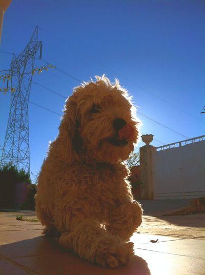 Dog Love Fotographia Foto Perro Dogs València