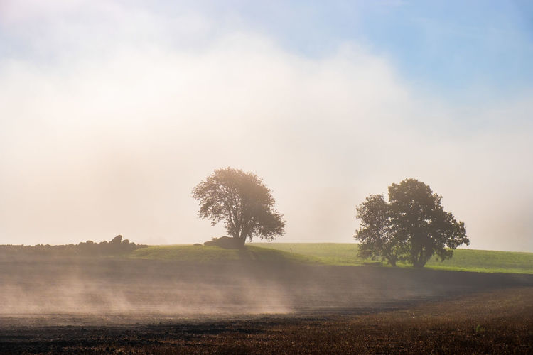 Beautiful misty morning in a rural landscape with trees in silhouettes