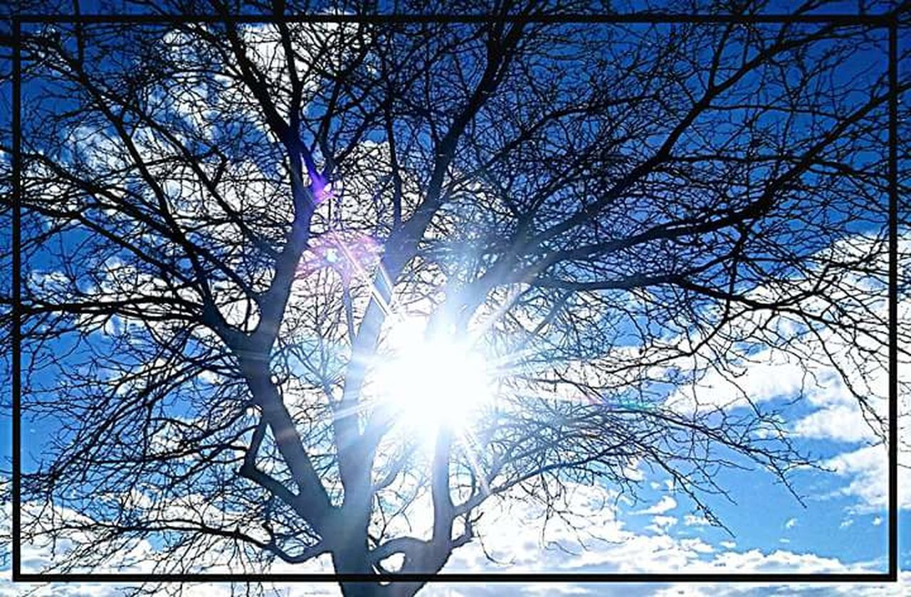 lens flare, low angle view, sun, bare tree, sunlight, sunbeam, tree, branch, outdoors, nature, beauty in nature, day, no people, sky, clear sky