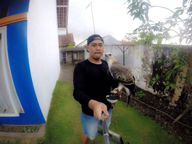 Falconry Eagle Selfie