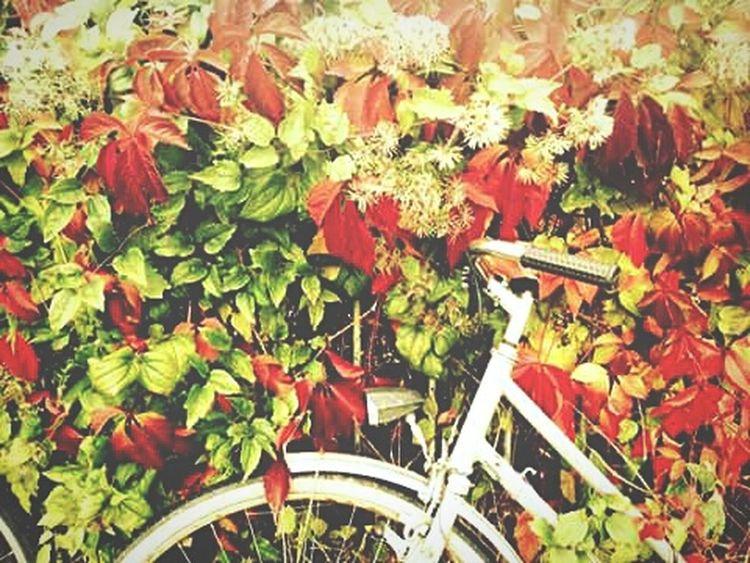 Autumn Herbst Fahrradabstellplatz Fahrradlenker Fahrrad Nature Lover Autumn Colors Autumnbeauty Herbstfarben Herbstblätter Herbstimpressionen