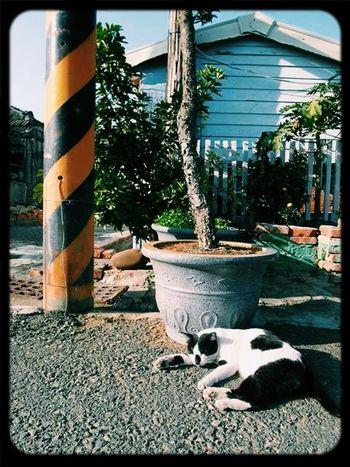 睡覺 Cat 貓 電線桿