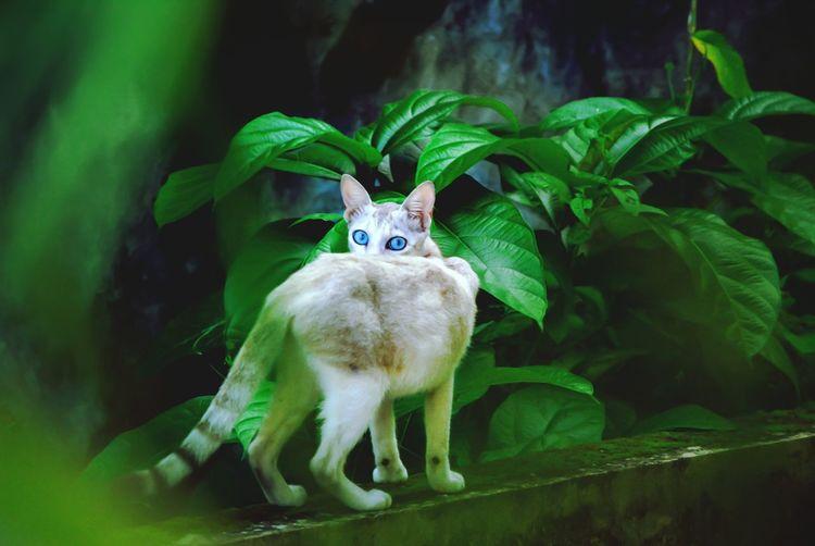 Look that eyes !!! Cat Petlove  Kerala Blueeyedcat Silentblackphotography Welcome Weekly
