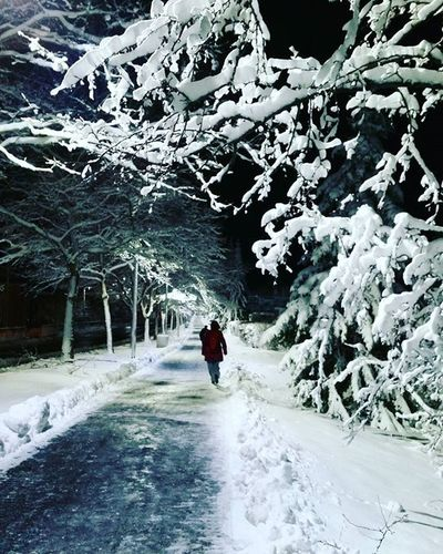 Winter Wonderland ❄⛄ Boston JamaicaPlain Winterwonderland Snow Lexi Winter Commute Instapretty Igersboston Bostondotcom Igboston VSCO Vscocam