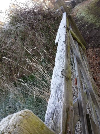 Winter 2013 Olney Buckinghamshire Frozen Nature Samsung Galaxy Note 4