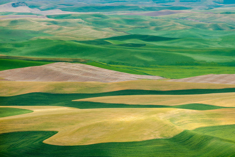 Eastern Washington Palouse. Plowed fields planted with wheat and lentils makes this location a wonderland of landscape abstractions. Environment Landscape Scenics - Nature Green Color No People Land Tranquil Scene Nature Beauty In Nature Tranquility Day Aerial View Backgrounds Grass Non-urban Scene Field High Angle View Outdoors Rolling Landscape Palouse  Palouse Wheat Fields Palouse Country Farm Farmland Eastern Washington Eastern Washington Farm Scene Abstract Wheat Wheat Field Lentils Western United States