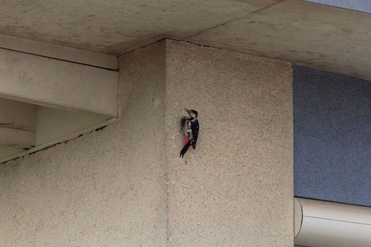 High angle view of woman walking in building