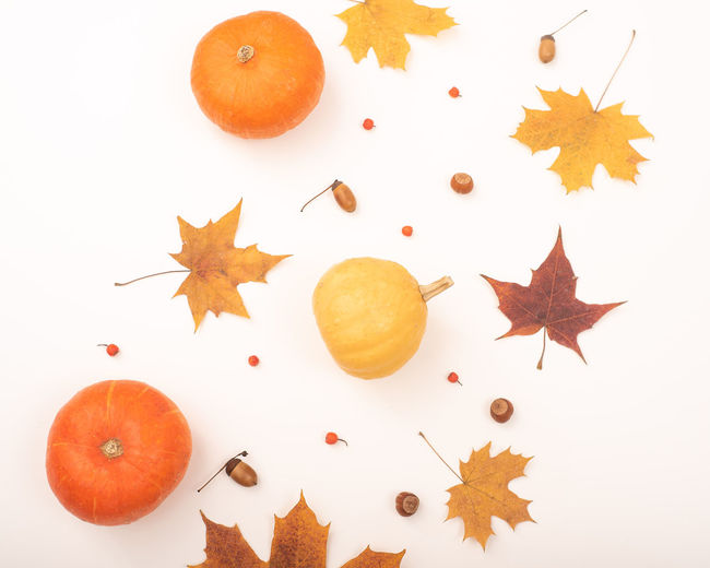 High angle view of orange leaves on white background