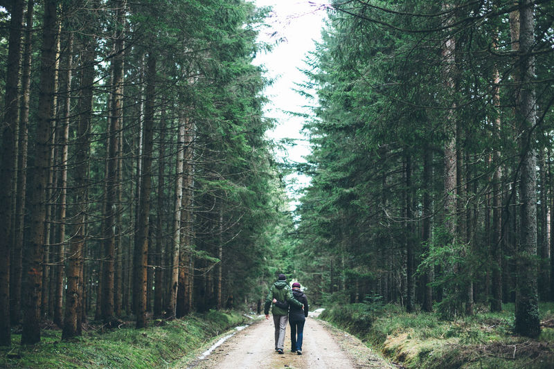 Rear view of couple walking on road amidst trees in forest