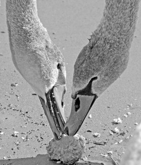 Close-up of birds on sand