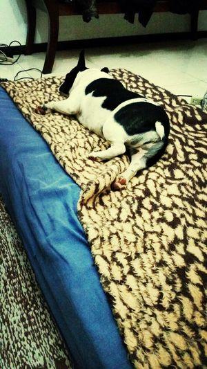 Dog Sleeping  Dog Cute Pets Cute♡