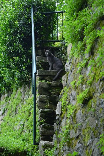 cats of Como Gray Cat Pets Tree Plant Green Color Domestic Cat Feline My Best Travel Photo Stay Out