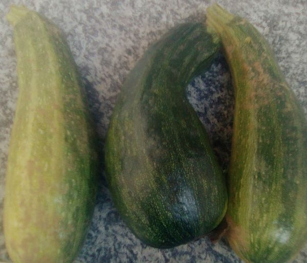 Zucchine Vegetable Full Frame Nature Tranquility Sole...☀ Cuore❤ Meteorology Scenics