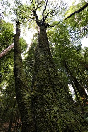 Australia Australian Landscape Landscape_Collection Majestic Nature Beauty In Nature Beauty In Nature Branch Day Forest Green Color Growth Landscape Low Angle View Majestic Nature No People Outdoors Rainforest Rainforest Australia Sky Tranquility Tree Tree Trunk