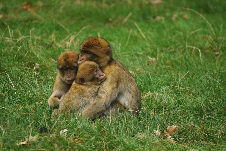 Capture The Moment Hello World Check This Out Safari Park Monkeys Love Animals Enjoying Life