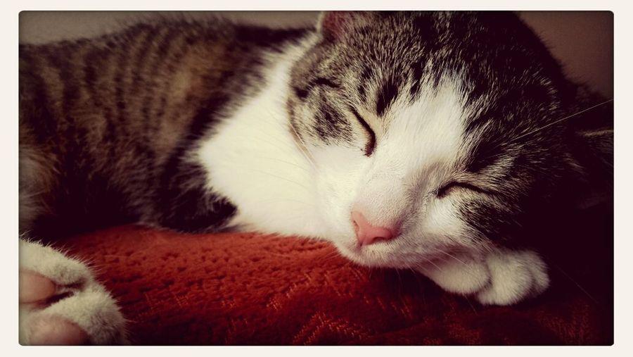 Kocie drzemki, kocie sny ♡ Cat♡ Sleeping I Want To Do This Jelous?