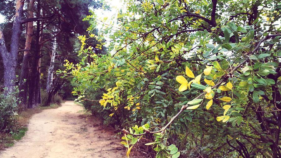 Лес Природа дорогавлес осень октябрь2017 мояосень Forest Nature Autumn🍁🍁🍁 Oktober