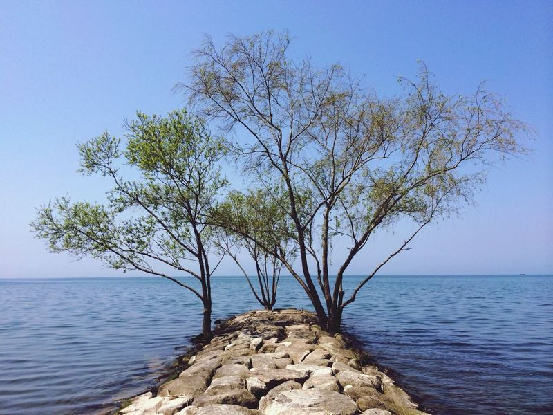 琵琶湖 Lake