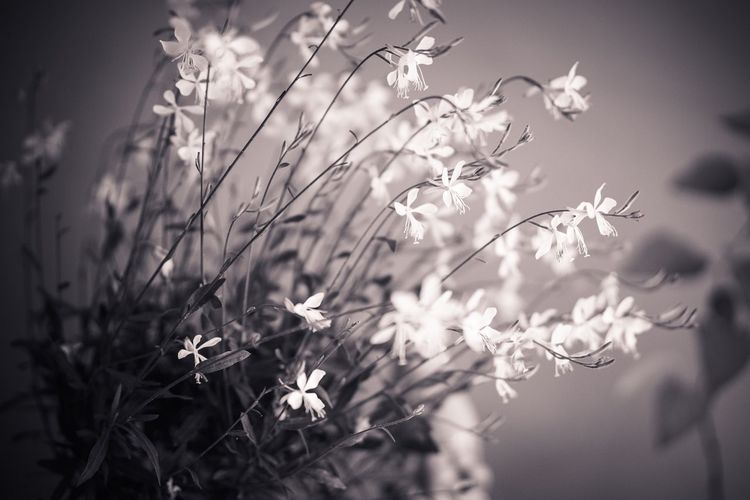 Growth Nature Flower Plant Beauty In Nature No People Outdoors Fragility Day Freshness Blooming Close-up Tree White Monochrome Black And White Light Glowing Directional Growing Towards Towards The Light