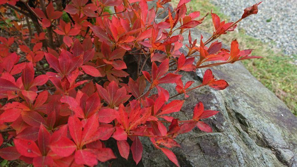 Nature Leaf 葉っぱ 秋色 庭で