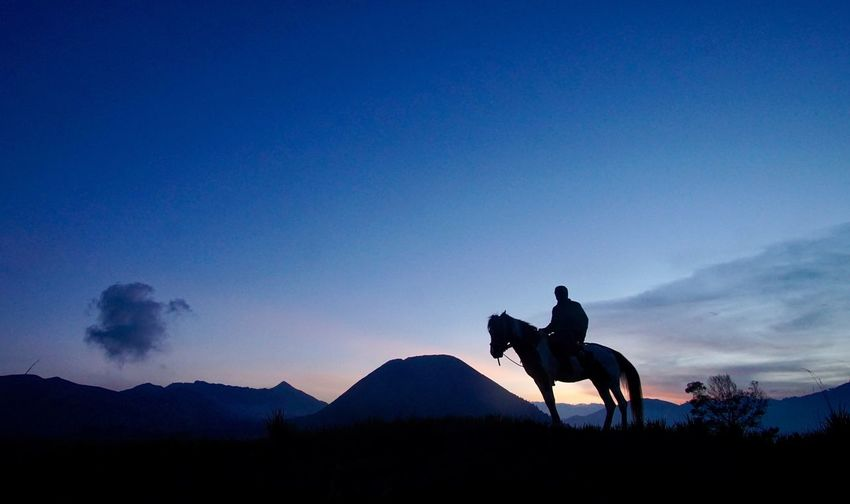 Bromo horseman Tourism INDONESIA Horseman Bromo Sky Silhouette Mammal Mountain Riding Domestic Animals Ride Blue Nature Men Scenics - Nature Leisure Activity Working Animal Sunset People Outdoors Animal Wildlife Domestic Beauty In Nature