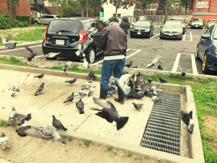 A BirdWhisperer found in Toronto That Sure is a lot of Pigeons