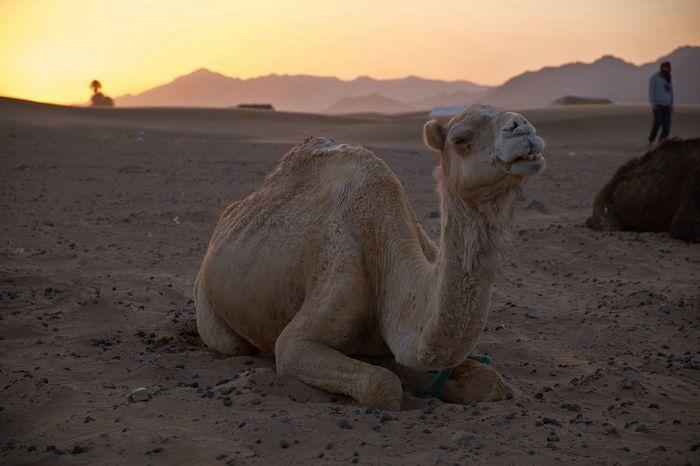 Zagora desert, Morocco Traveling Travel