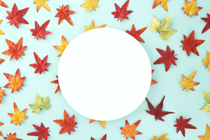 Empty dish decorative Halloween or autumn leaves on pastel pale blue background, with copy space. Flat lay. Sales Holiday Flyer Banner Poster Travel Traveling Traveler Vacation Trip Sale Template Mockup Abstract Art Autumn Leaves Falling 2019 2020 Wreath New Year Halloween Autumn Leaves Autumn Background Plate Minimal Flat Lay Fall Background Leaf Design Frame Orange Concept Composition Green Maple Bright Pattern Forest Decoration Shape Star Shape Geometric Shape Christmas Decoration Circle Indoors  No People Christmas Close-up Celebration White Color Christmas Ornament Still Life Blue High Angle View