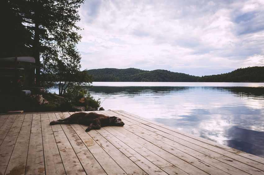 Relaxing Beauty In Nature Cloud - Sky Day Dock Dog Lake Nature No People Outdoors Relaxation Scenics Sky Sleeping Tranquil Scene Tranquility Tree Water Wood Paneling