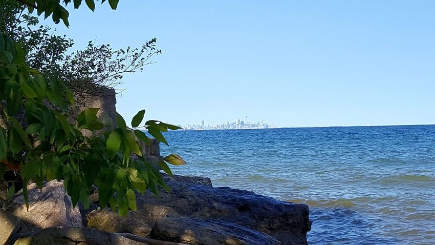 Toronto Skyline The View From Here ACROSS THE LAKE Across The Water Water Lake Lakeshore Beach Horizon Over Water Nature Outdoors Day Clear Sky Sky Blue No People Rocks And Water From My Point Of View The Week On EyeEm Beauty In Nature Nature Is Beautiful Leaves Tranquility Lake Ontario Lost In The Landscape