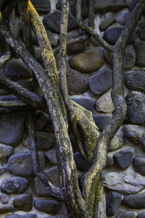 The wall Backgrounds Full Frame No People Pattern Close-up Outdoors Day Travel Destinations Jalisco Chapala Beauty In Nature Nature Tranquility
