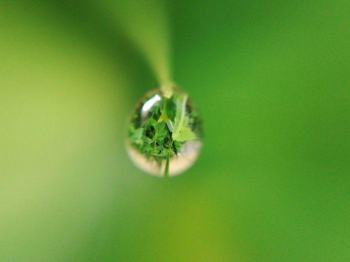 Droplet Green Maximum Closeness Eyeem Philippines Minimalism