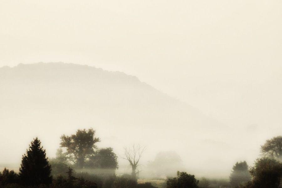 Heute morgen war der Start in den Tag Neblig und ziemlich Herbstlich Tree Tranquil Scene Fog Tranquility Scenics Beauty In Nature Foggy Silhouette Landscape Nature Mountain Growth Non-urban Scene Outdoors Day Sky Majestic Remote Solitude Mist Showcase September Ladyphotographerofthemonth