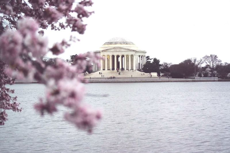 Cityscapes Washington DC Washington, DC. Tidal Basin Jefferson Memorial Cherry Blossoms Seeing The Sights Urban Spring Fever