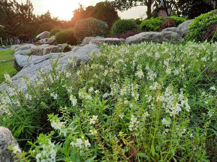 View of flowering plants on rocks
