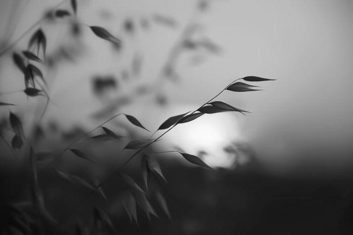 Simple Blackandwhite Blackandwhite Photography Black And White Monochrome Monochromatic Monotone Silhouette