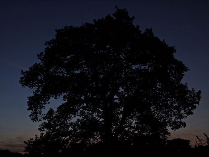 Astronomy Beauty In Nature Clear Sky Growth Late Evening Sky Low Angle View Nature Night No People Oak Tree Outdoors Scenics Silhouette Sky Tranquil Scene Tranquility Tree