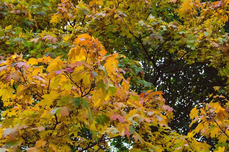 Autumn Natural