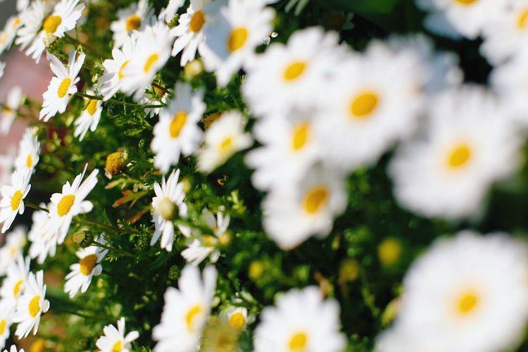 花🌼 Flower