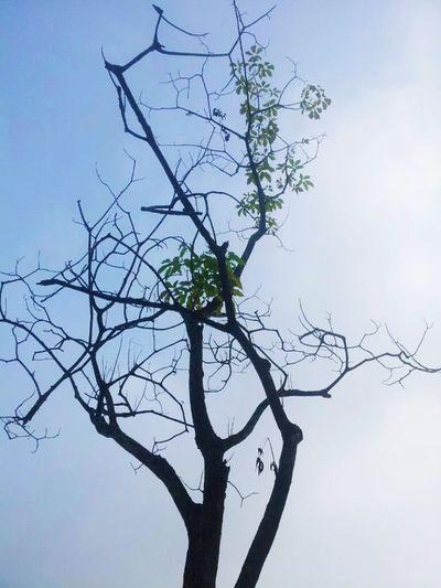 Tree And Sky ^_^ Feeling Inspired EyeEm Nature Lover Kuala Lumpur Muahh :*