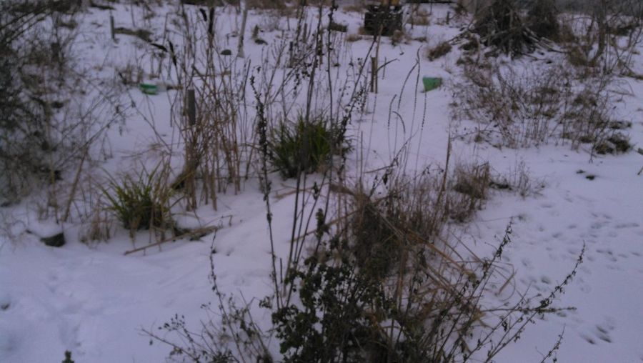Plants growing on snow covered land