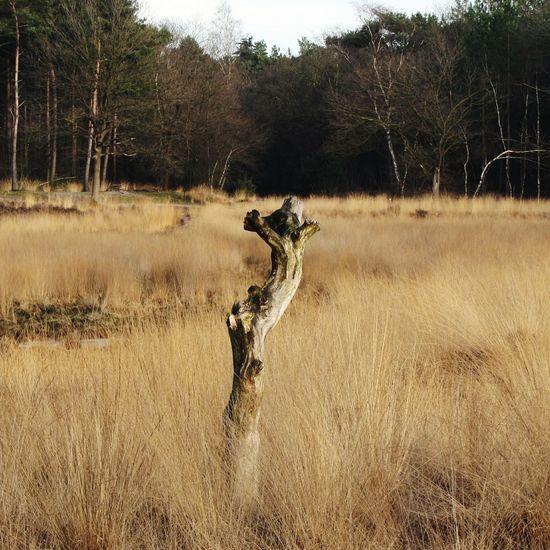 Marsh sprite Tree Stump Animal Shape Marsh Reeds Sunlight Trees Forest Wintertime Grass Nature Outdoors Betterlandscapes