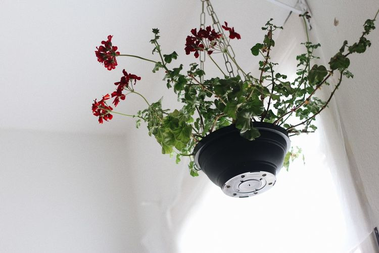 Low angle view of potted plant hanging against wall